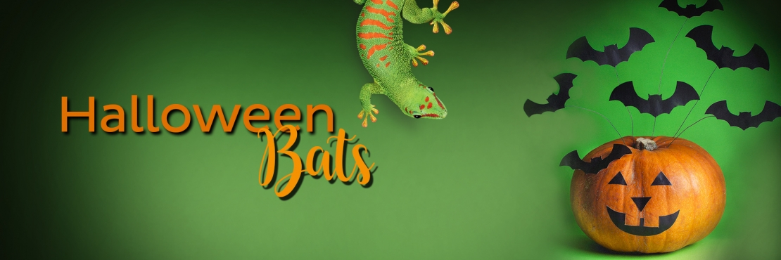 Bostik DIY South Africa Tutorial Halloween Bats banner