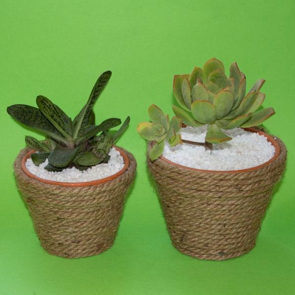 Bostik DIY South Africa Tutorial Planter Pots teaser image